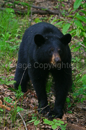 Young Bear - 5/27/11