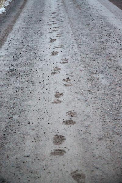 Bear tracks NBR 10/23/12