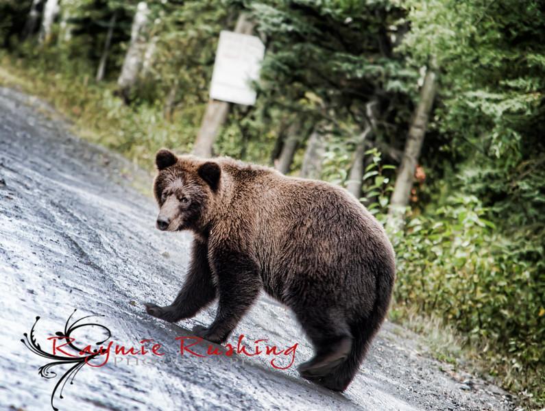 Bear 2015