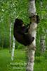 Bear curiosity