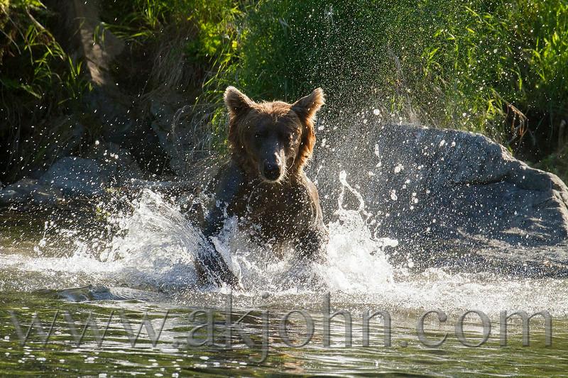 bearview_380