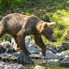 bearview_442