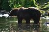 bears-06-28-05-3582