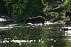 bears-06-28-05-3583