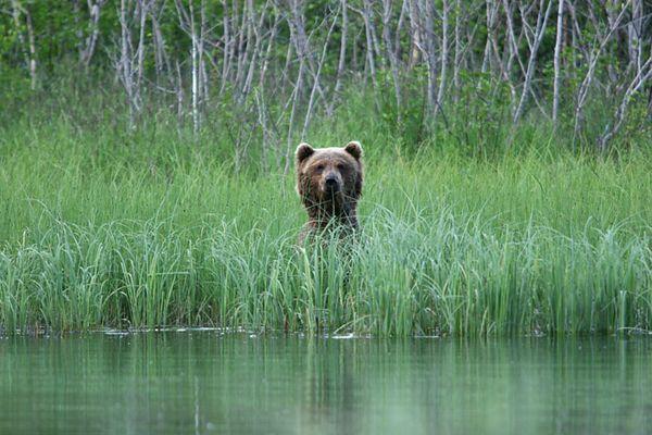 bears-06-28-05-3514