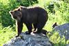 bears-06-28-05-3571