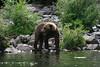 bears-06-28-05-3596