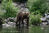 bears-06-28-05-3598