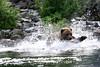 bears-06-28-05-3605