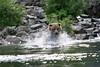 bears-06-28-05-3602