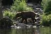 bears-06-28-05-3592