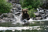 bears-06-28-05-3601