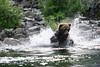 bears-06-28-05-3604