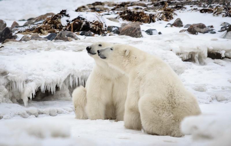Polar Double