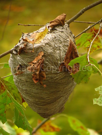 Bees nest - 3/3/15