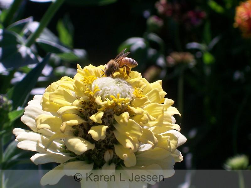 It Bee Honey Soon