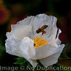 Bee Here Now 2010<br /> (1x1)