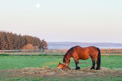 Belgium Horses-20