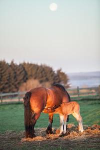 Belgium Horses-26