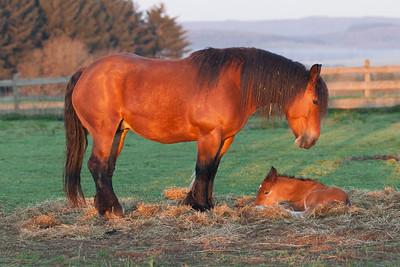 Belgium Horses-23