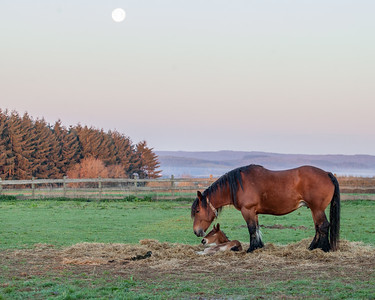 Belgium Horses-10