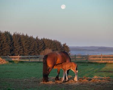 Belgium Horses-25
