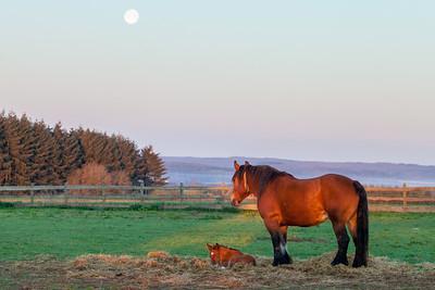 Belgium Horses-21