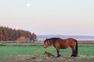 Belgium Horses-11
