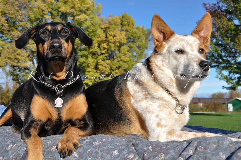 Bella & Zeuss  43