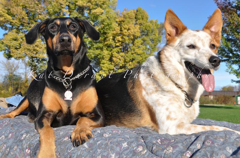 Bella & Zeuss  42