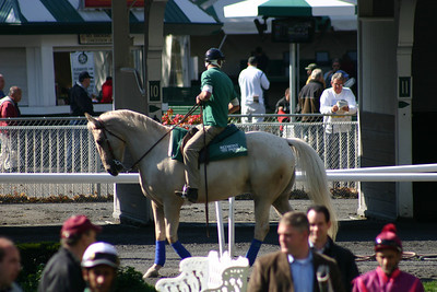 2010 Belmont Race Track