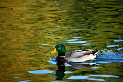 Bend Down Quickly (DUCK)