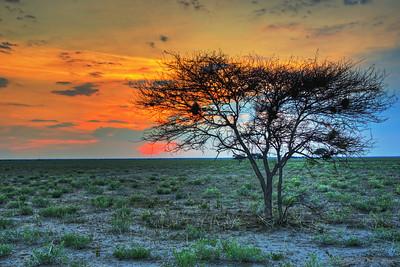 Kalahari Desert Sunset
