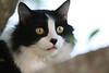 Sammie Davis.  Great kitty catty.