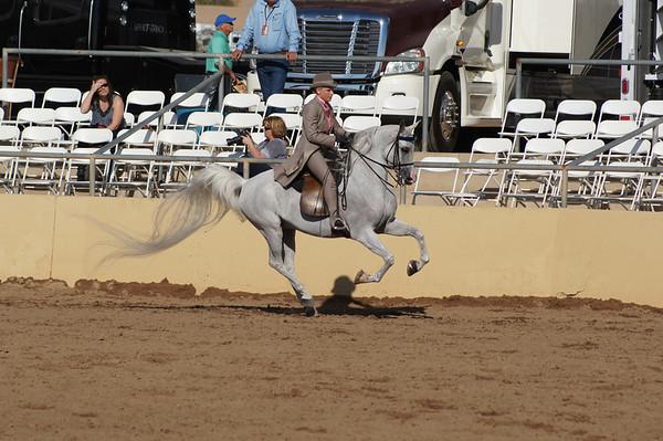 Best of Scottsdale Arabian horse show