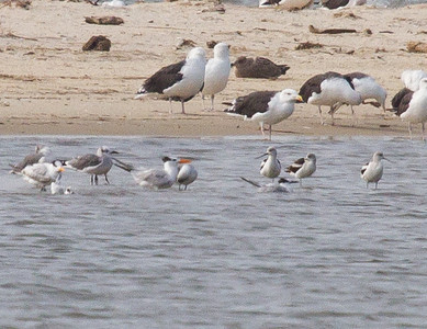 Bethel Beach Natural Area, Virginia