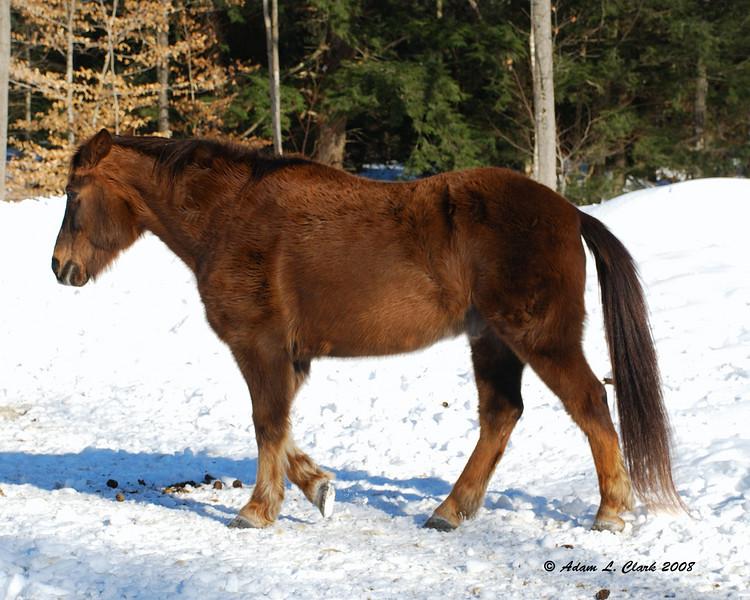 1 of my Aunt's horses.