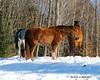 3 of my Aunt's horses.
