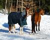 2 of my Aunt's horses.