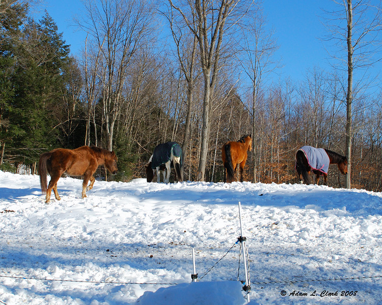 All 4 of my Aunt's horses.