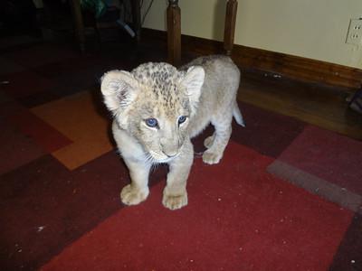 Big Cat CARE Sanctuary 2-25-12