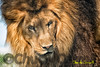 Big Cat Habitat & Gulf Coast Sanctuary Class & Photo Shoot