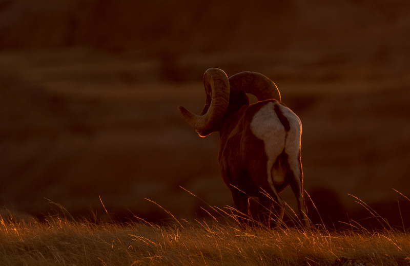 Setting sun on Ram