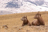 MBH-4442: Ewe and Lamb in environment