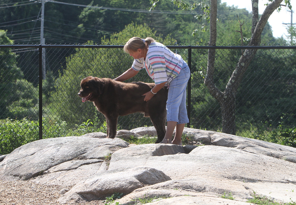 . Donna Price of Billerica with her 3-year-old Newfoundland, Bruno, on the natural rock feature at the Billerica Dog Park.  (SUN/Julia Malakie)