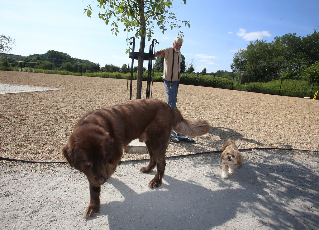 . Rick Price of Billerica with 3-year-old Newfoundland, Bruno, and 5-year-old Lhasa apso, Chloie, at the recently-opened Billerica Dog Park. In the middle of a hot afternoon, they had the park to themselves for awhile. (SUN/Julia Malakie)