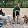 Saturday morning at the Billerica Dog Park. Morgan Kennedy, 8, of Billerica, plays with, from left, his own longhaired shepherd Nala, Alpine, a pit mix belonging to Bruce & Melissa Cleaver of Billerica, and Yoshi, a beagle-corgi mix belonging to Will Daugherty of Billerica. (SUN/Julia Malakie)