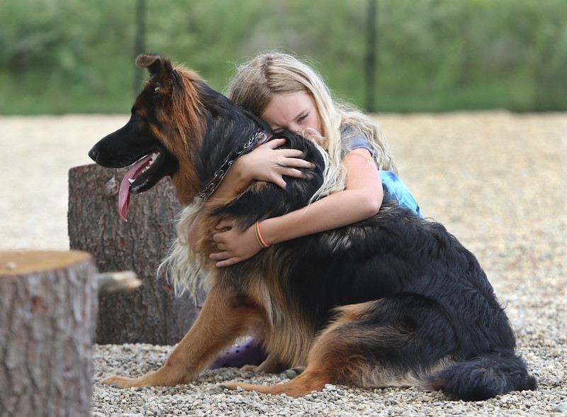 Saturday morning at the Billerica Dog Park. Lauren Kennedy, 11, of Billerica, hugs her family's longhaired shepherd, Nala, who was getting tired after a morning of playing with other dogs. (SUN/Julia Malakie)
