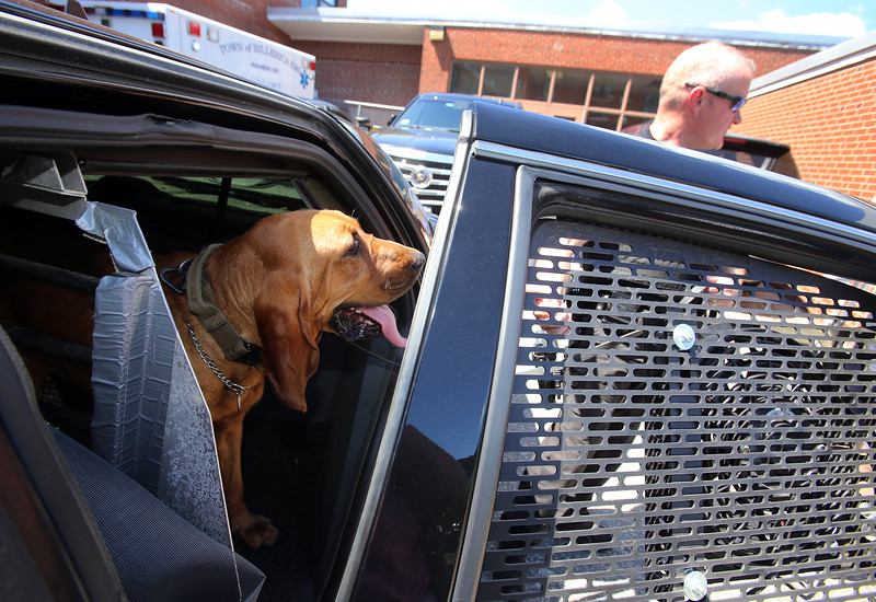 Billerica Police K-9 officer Don MacEachern, with his 2-1/2 year old bloodhound, Wizard. Besides leaving air conditioning on, he has a Hot Dog Cooling System in his car which sets off alarms if the AC fails and the interior temperature rises to dangurous levels, and also turns on a window fan in this car door. (SUN/Julia Malakie)