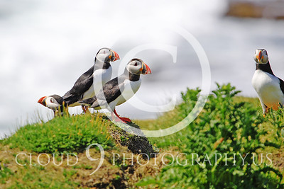 AN - Puffin 00028 by Tony Fairey